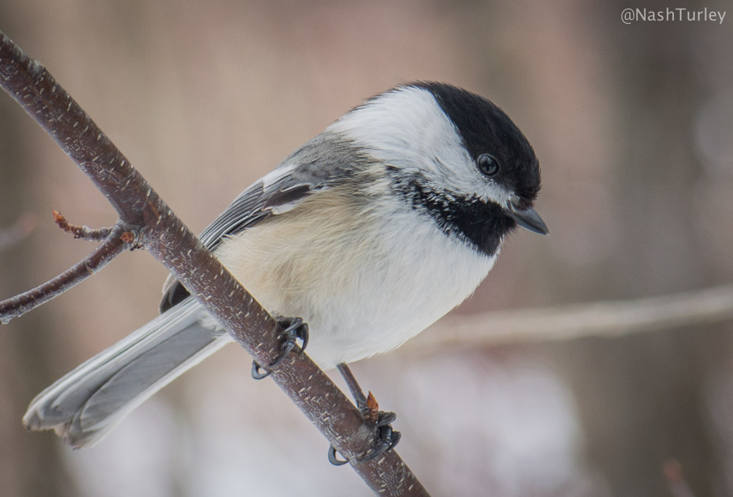 ontario southern woodpeckers signs spring beauty cute humans background whited distracting washed shot