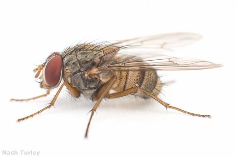 mine fly